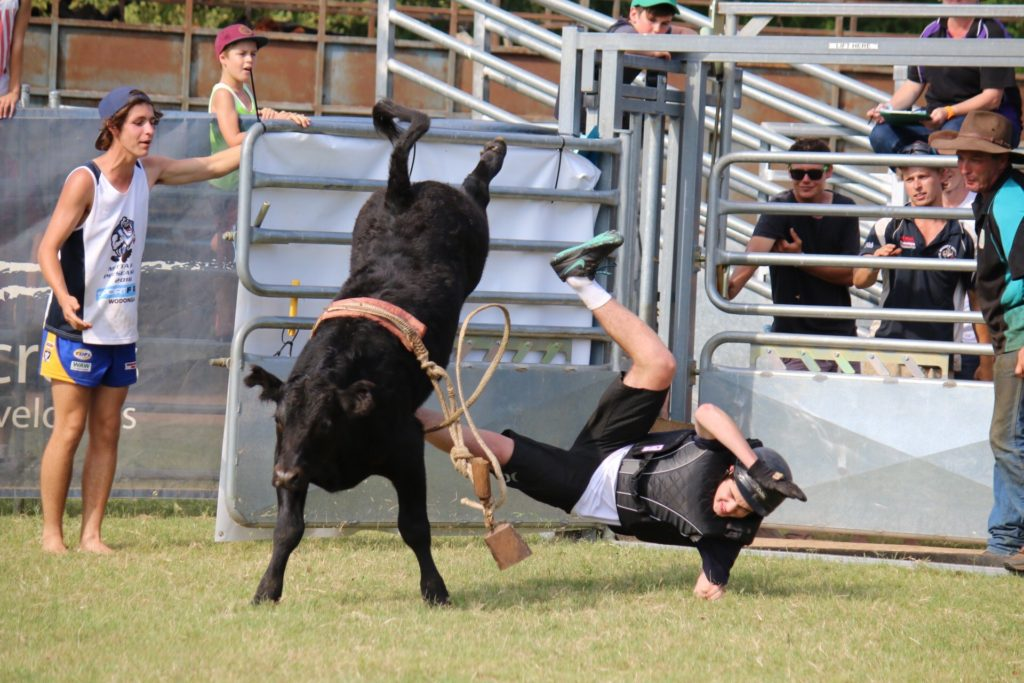 Novelty horse and muster rodeo